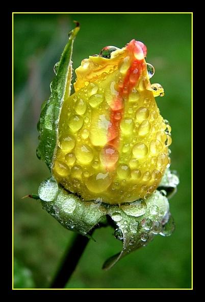 Soaking wet by hgabi