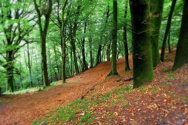Leafy Carpet by shinyredmx5