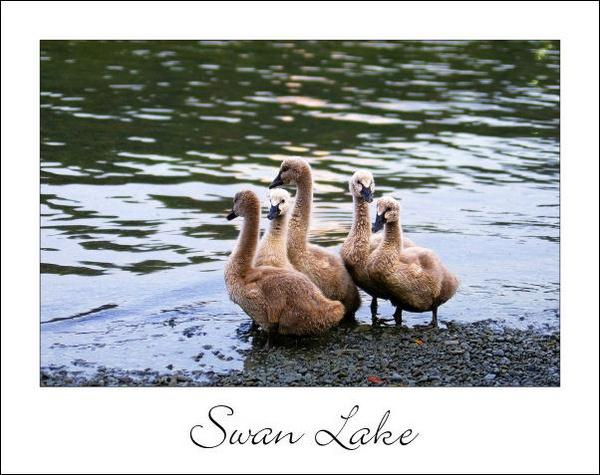 Swan Lake by Acoustics4me