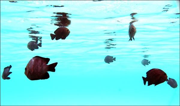 Fish 1 by francisr
