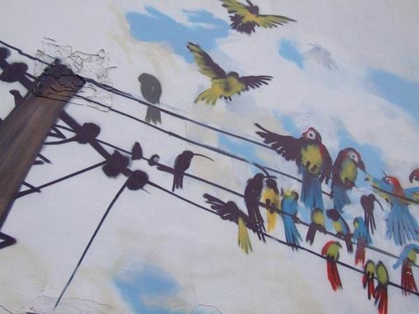 Birds by iainpb