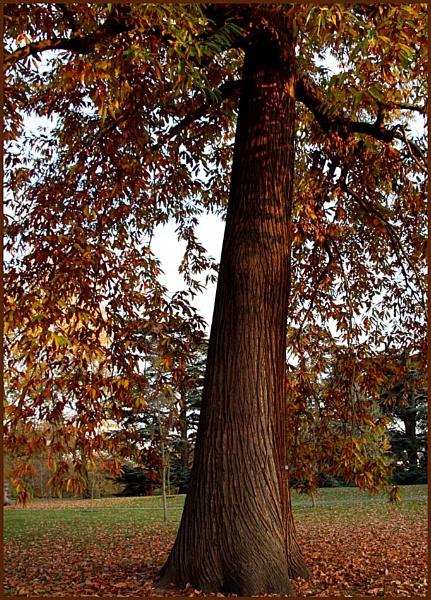 Chestnut trunk 2 by AngelaR
