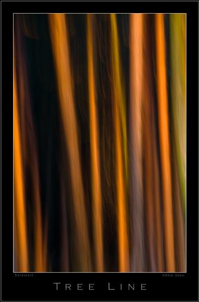 Tree Line by sherlob