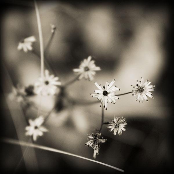 Delicate by azhurian