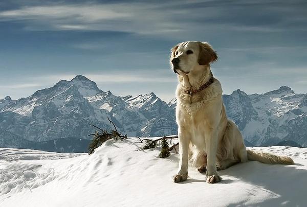 alpine dog by joze