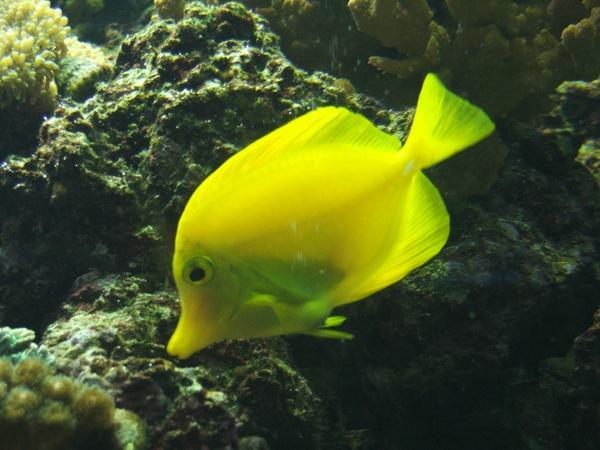 Fishy by RickP