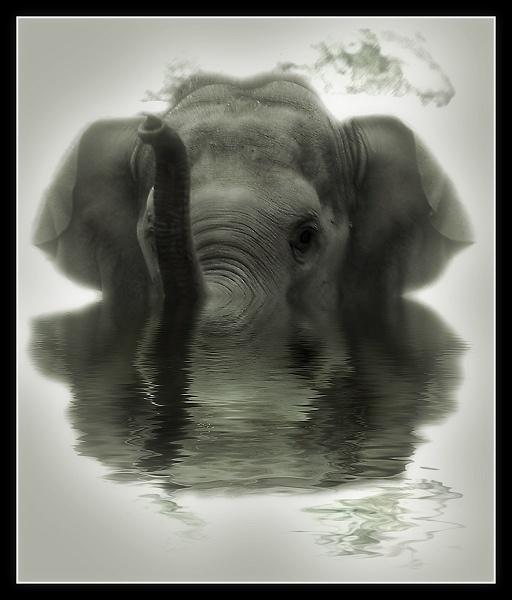 Baby Elephant\'s Bath by AliMurray