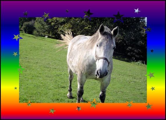 rocky by pony10girl