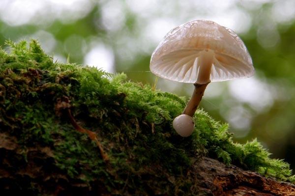 Shimmering Fungi by shinyredmx5