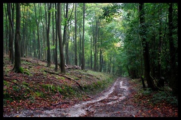 Graffam Woods by shinyredmx5