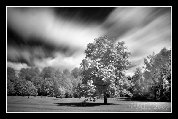 Infrared Parkland by mialewis