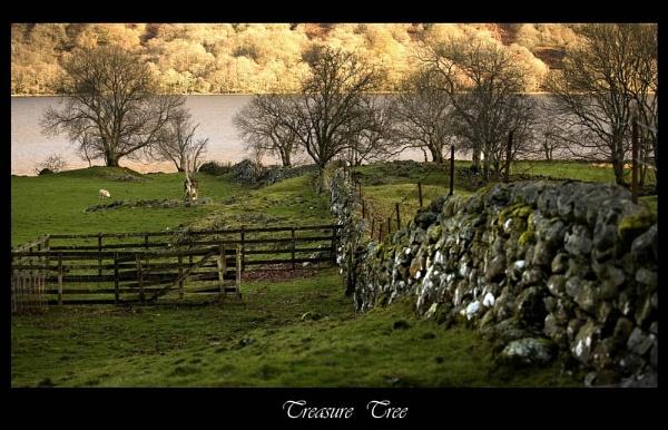 Treasure Tree by daviewat