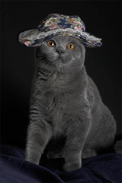 Cat in a Hat by teddy