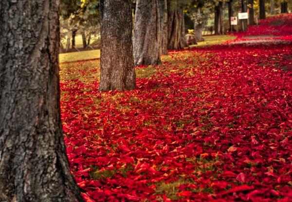 Autumn morning 2 by Strobekid
