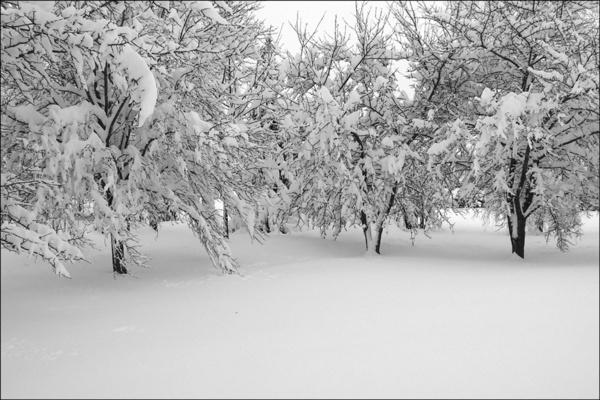 Winterpoem by brownsilent