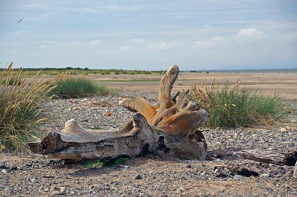 Driftwood by Birdyian