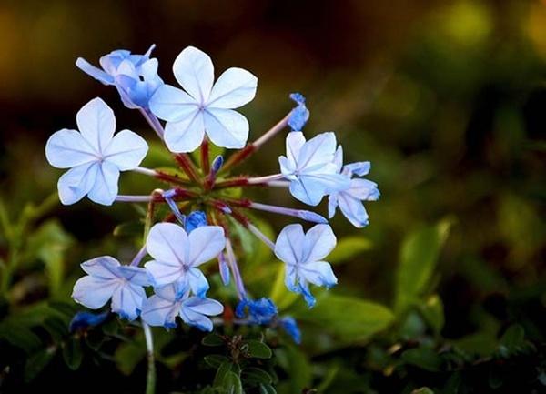 Blue magic by Gil