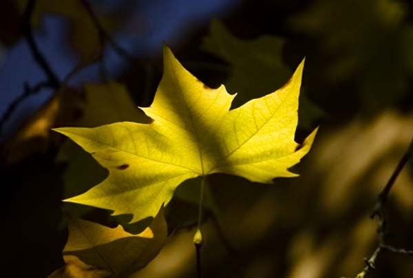 yellow by Gil