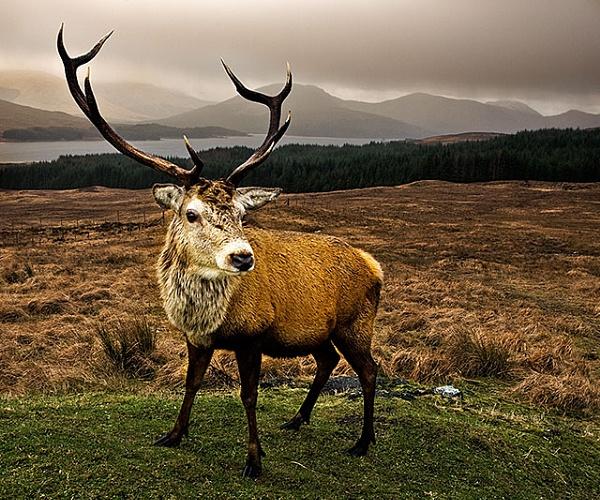 Oh deer.... by robs