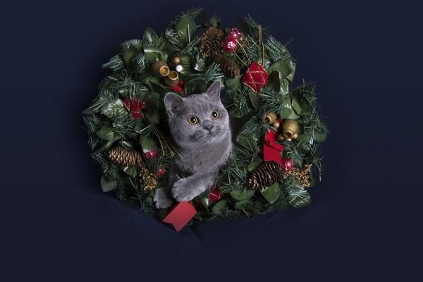 Tilly@Christmas2 by teddy