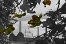 Autumn Coming