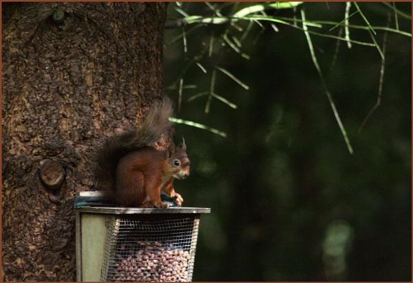 Squirrel Alert by danielle1987