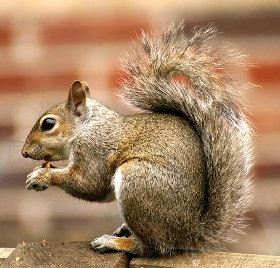 No nut jokes Please!!! by photogary