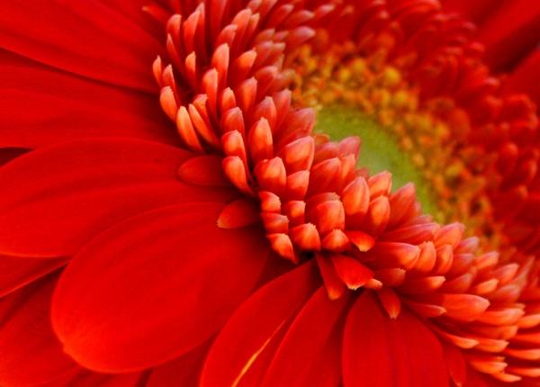 Sunflower by paddyf