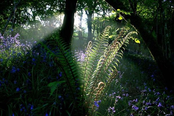 Ferns in Sunburst by renavatio