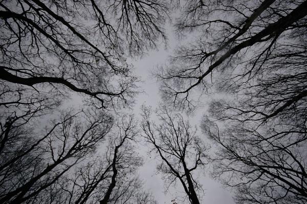 Reach for the sky by Birdseye