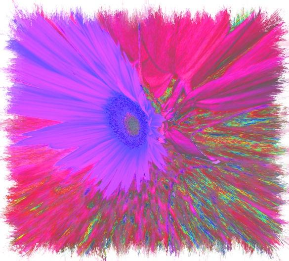 flower power2 by jaecat