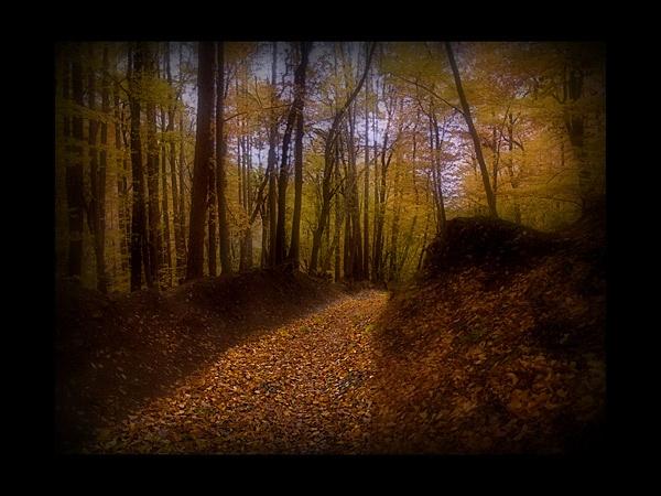 Autumn gullet by hgabi