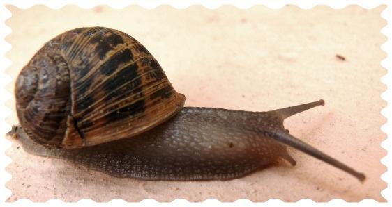 Snail by leons29