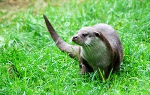 (w)otter beauty by dragarth