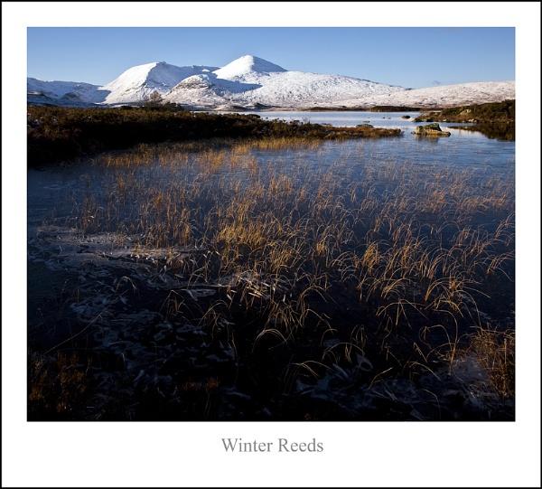 Winter Reeds... by Scottishlandscapes
