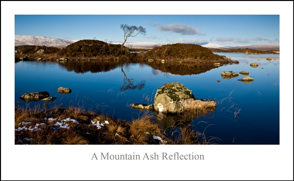 A Mountain Ash Reflection... by Scottishlandscapes