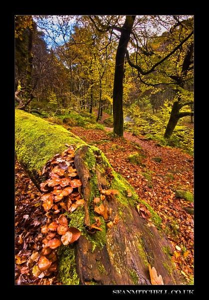 Fallen Autumn by wamp