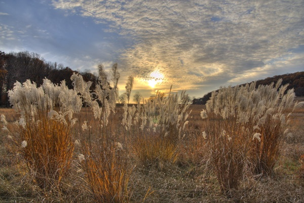 Sunset Over the Marsh Grasses by skoffs