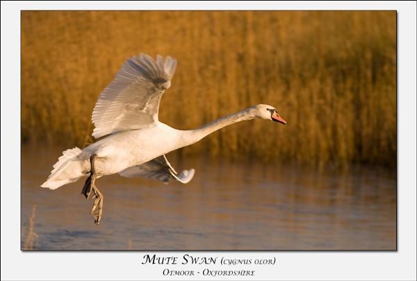 Elegant Landing by bytheedge
