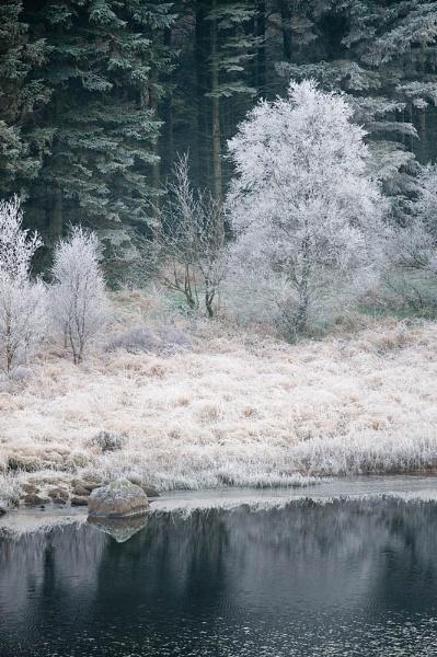 Frosty Tree 2 by Goggz