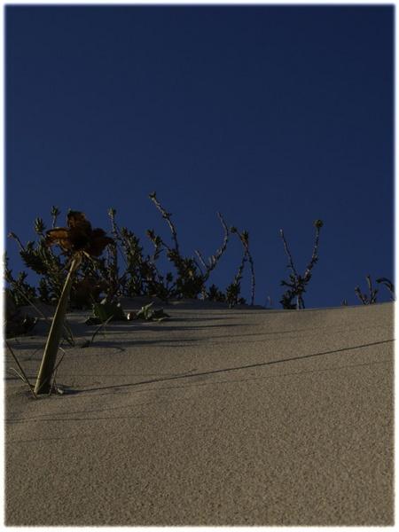 sandlive by NATURAL_mente