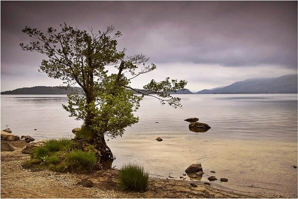 Loch Lomond Tree by Anthony