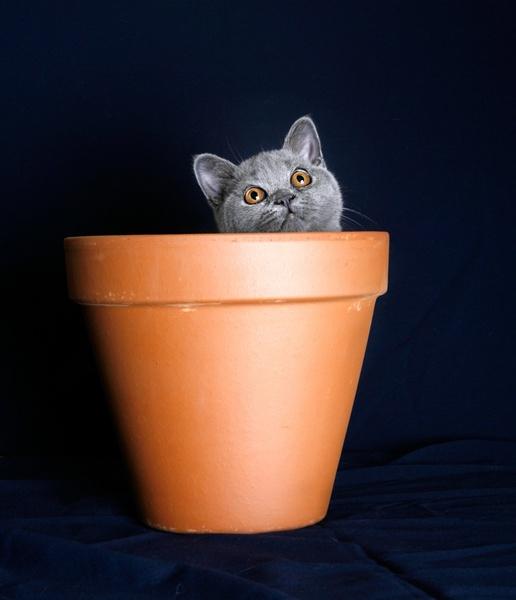 Tilly Pot by teddy