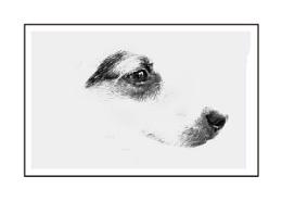Photo : Mimimalist Dog