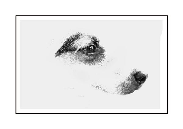 Mimimalist Dog by Twizzle