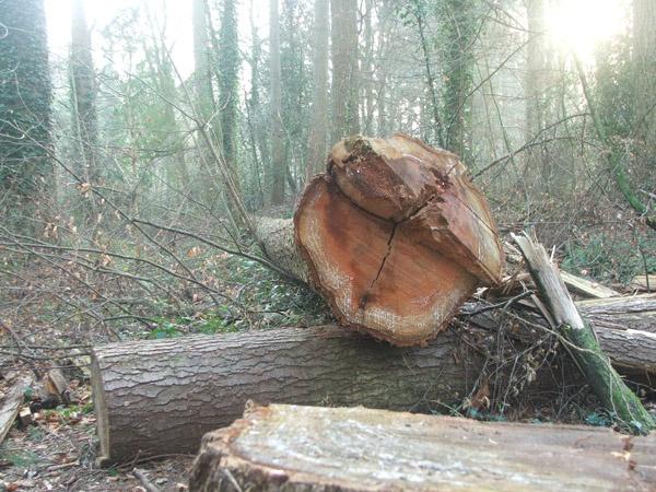 Logging by RickP