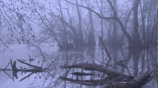 Misty morning by JakeK