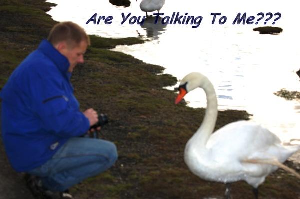 aidan vs the swan by BrenS