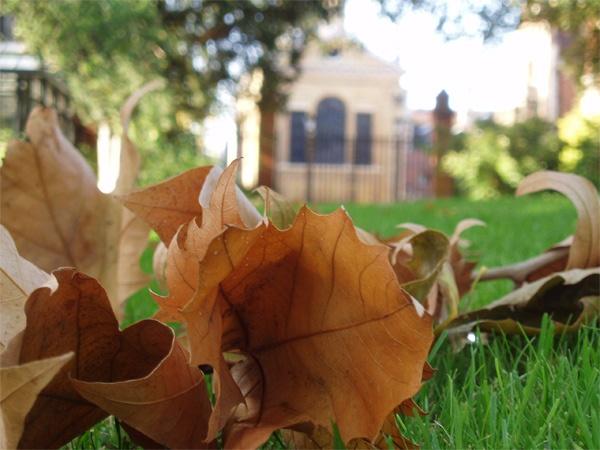 Autumn in Cambridge by _estel_