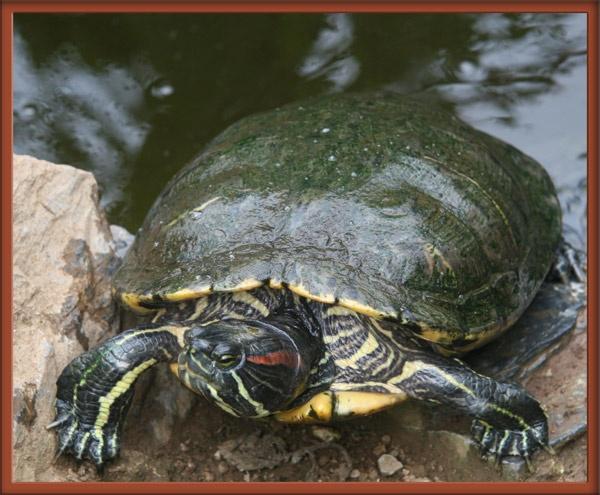 Turtle by jwt